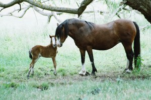 D. Lucia and filly foal