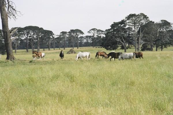 Dalgangle Stud at Ashmore Farm